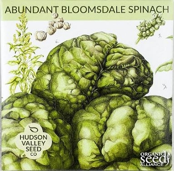 Bloomsdale SPINACH